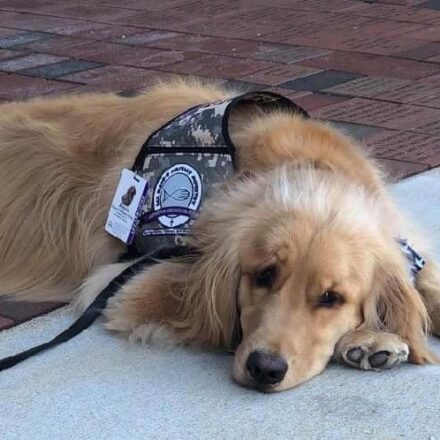 Amos Comfort Dog